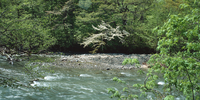 奥入瀬渓流 23018055628| 写真素材・ストックフォト・画像・イラスト素材|アマナイメージズ