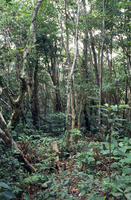 森林 23018055678| 写真素材・ストックフォト・画像・イラスト素材|アマナイメージズ