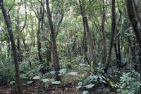 森林 23018055679| 写真素材・ストックフォト・画像・イラスト素材|アマナイメージズ