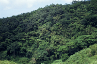 森林 23018055680| 写真素材・ストックフォト・画像・イラスト素材|アマナイメージズ