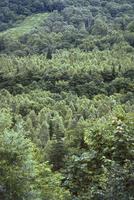 針葉樹林 23018055789| 写真素材・ストックフォト・画像・イラスト素材|アマナイメージズ