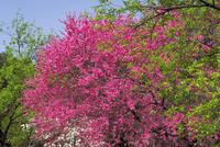 早春の木々