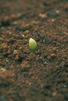 発芽(トウモロコシ)1