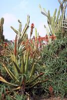 公園の植物