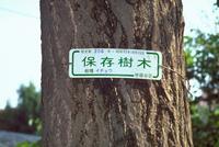 保存樹木の看板