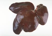 うし(肝臓)