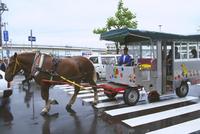 函館の観光馬車