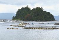 桜島南側の養殖場