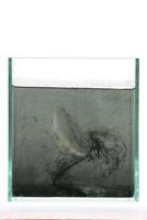 クラゲ水そうじ実験3