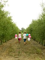 オリーブ畑を走っている外国人の子供たち