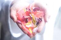 両手いっぱいに持った花びら