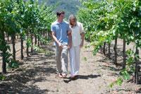 ブドウ畑を散歩するカップル