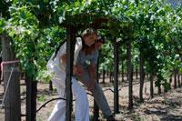 ブドウ畑を散歩するカップル 24002000359| 写真素材・ストックフォト・画像・イラスト素材|アマナイメージズ