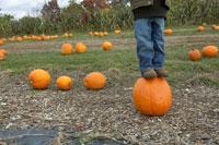 かぼちゃの上に立つ少年