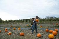 かぼちゃを拾う少年達
