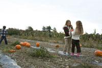 かぼちゃを拾う子供達