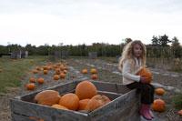 かぼちゃ畑で遊ぶ少女