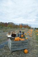 かぼちゃ畑で遊ぶ子供達