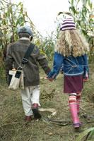 とうもろこし畑を散歩する少年と少女
