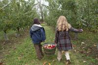 りんごを籠で運ぶ少年と少女 24003000303A| 写真素材・ストックフォト・画像・イラスト素材|アマナイメージズ