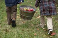 りんごを籠で運ぶ少年と少女 24003000304| 写真素材・ストックフォト・画像・イラスト素材|アマナイメージズ