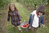 りんごを籠で運ぶ少年と少女 24003000305| 写真素材・ストックフォト・画像・イラスト素材|アマナイメージズ