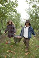 りんごを籠で運ぶ少年と少女
