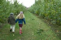 りんご畑を手を繋いで散歩する少年と少女 24003000308  写真素材・ストックフォト・画像・イラスト素材 アマナイメージズ