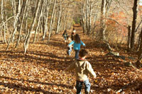 落ち葉の中を走る子供達 24003000363| 写真素材・ストックフォト・画像・イラスト素材|アマナイメージズ