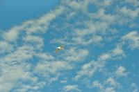 青空に飛ぶ白い鳥