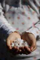 桜の花びらを両手いっぱいに持った女の子