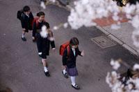 桜の木の下を登校する小学生