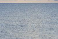 ケープコッドの海