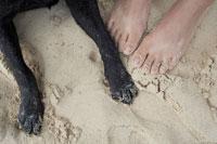 砂浜の上の女性の足と犬の足