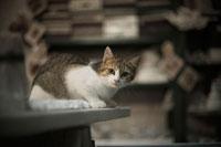 ベンチに座っている猫