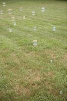 芝生の上を飛ぶシャボン玉