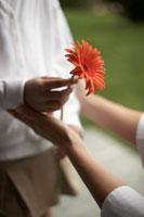 ガーベラを母親に手渡す娘 24014000742| 写真素材・ストックフォト・画像・イラスト素材|アマナイメージズ