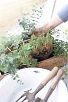 箱に入った植木鉢