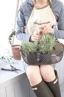 かごに入った苗木を持つ女性の手元