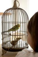 鳥を見る少女