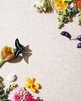 生花のウォールペーパーと蝶 24015000498B| 写真素材・ストックフォト・画像・イラスト素材|アマナイメージズ