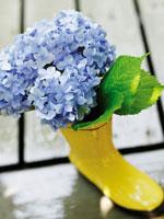長靴に入ったアジサイの花