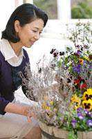 花壇の花を見るシニア女性 24020000278A| 写真素材・ストックフォト・画像・イラスト素材|アマナイメージズ