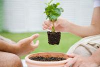 苗を植木鉢に植える男性と女性の手元 24023000110| 写真素材・ストックフォト・画像・イラスト素材|アマナイメージズ