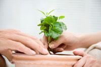 苗を植木鉢に植える男性と女性の手元