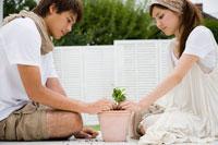 苗を植木鉢に植える男性と女性 24023000117| 写真素材・ストックフォト・画像・イラスト素材|アマナイメージズ