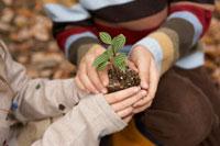 苗を持つ子供2人の手元 24024000267A| 写真素材・ストックフォト・画像・イラスト素材|アマナイメージズ