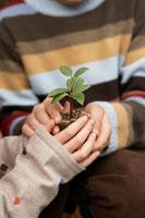 苗を持つ子供2人の手元 24024000268| 写真素材・ストックフォト・画像・イラスト素材|アマナイメージズ