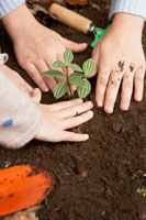 苗を植える少年少女2人の手元 24024000272| 写真素材・ストックフォト・画像・イラスト素材|アマナイメージズ