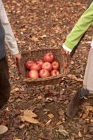 リンゴのかごを持つ少年少女2人の手元 24024000330| 写真素材・ストックフォト・画像・イラスト素材|アマナイメージズ
